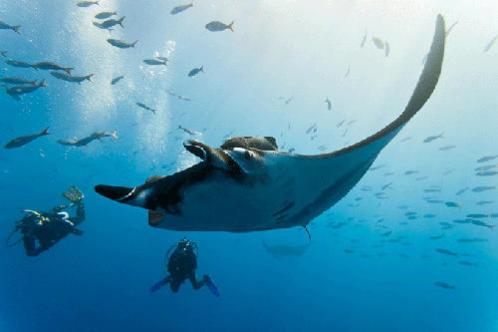 conseil destinations plongée sous marine automne hiver subea maldives raie manta