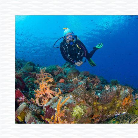 conseil destinations voyage plongée sous marine automne hiver subea