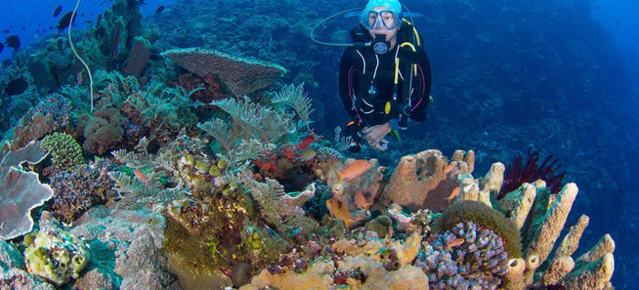 conseil destinations plongée sous marine automne hiver subea indonésie alor rumah biru