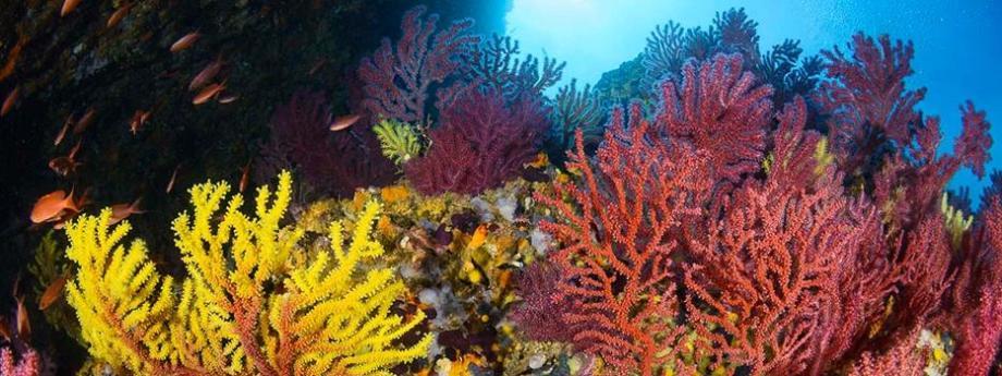 10 reasons to start scuba diving subea carall bernat