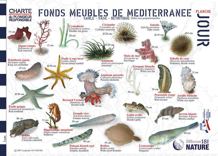 tips discover mediterranean fauna flora longitude 181 seabed furniture day subea
