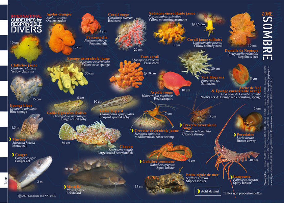 tips discover mediterranean fauna flora longitude 181 dark wall subea