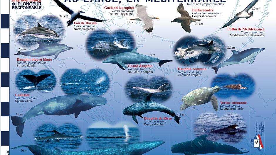 tips discover mediterranean fauna flora longitude 181 subea