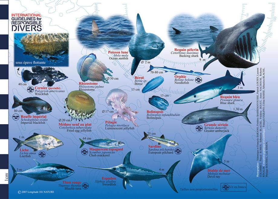 tip discover mediterranean fauna flora longitude 181 subea