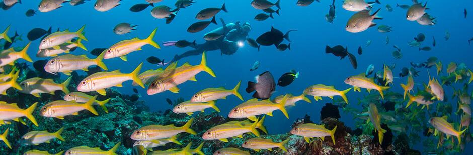 lexique plongée sous marine milieu aquatique subea gili tepekong