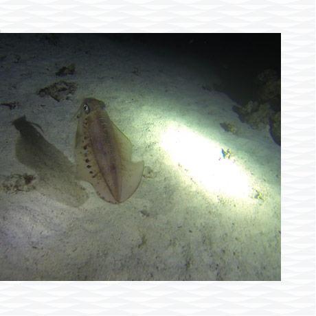 conseil plongée sous marine nuit faune flore subea