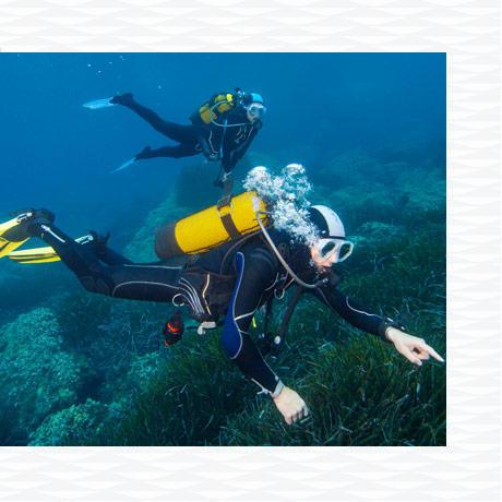 conseil comment choisir combinaison plongée sous marine taille subea