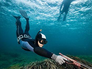 réglementation mailles chasse sous-marine FNPSA subea