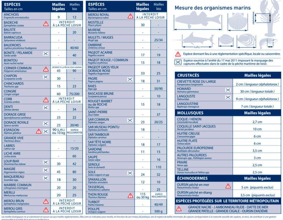 tableau mailles légales et biologiques mer méditerranée chasse sous-marine subea