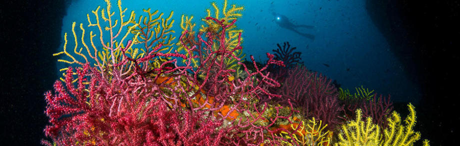 subea christmas gift ideas scuba adopt a coral