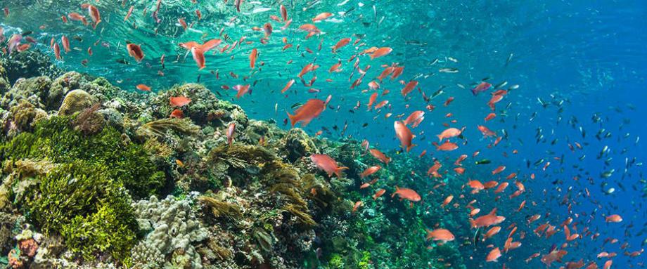 10 raisons de pratiquer le snorkeling subea découverte monde marin