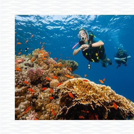 charte plongeur responsable longitude 181 partenaire subea centres plongée responsables aménagement écologique