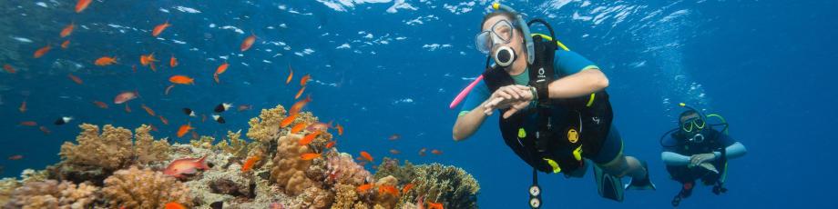 從浮潛到水肺潛水…