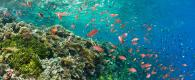 8 eco-friendly ways for ocean preservation subea