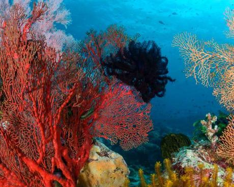 Adoptez un corail et contribuez à la préservation de l'environnement marin !