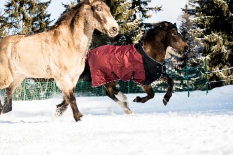 Alt/comment-choisir-couverture-cheval-non-tondu