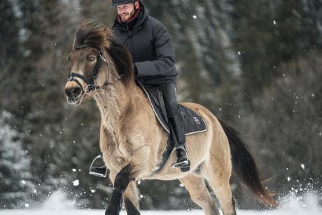 Alt/pourquoi tondre son cheval