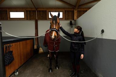 Alt/petits-gestes-confort-cheval-froid-preparation
