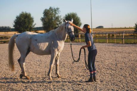 Alt/la digestion du cheval