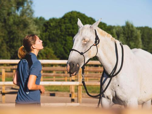Favoriser le bien-être du cheval au pansage