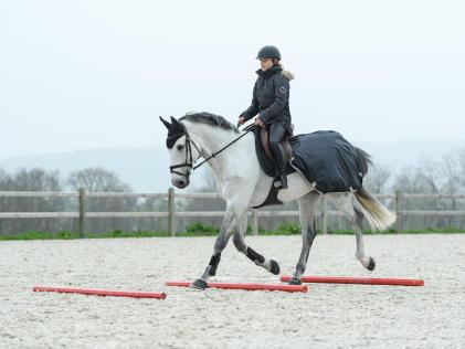 cheval qui passe sur des barres au sol