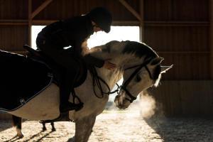 Alt/paardrijden-bij-koud-weer-teaser