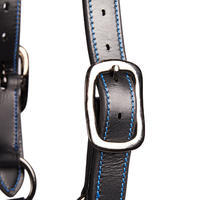 Performer Horseback Riding Leather Halter for Horse and Pony - Black/Blue