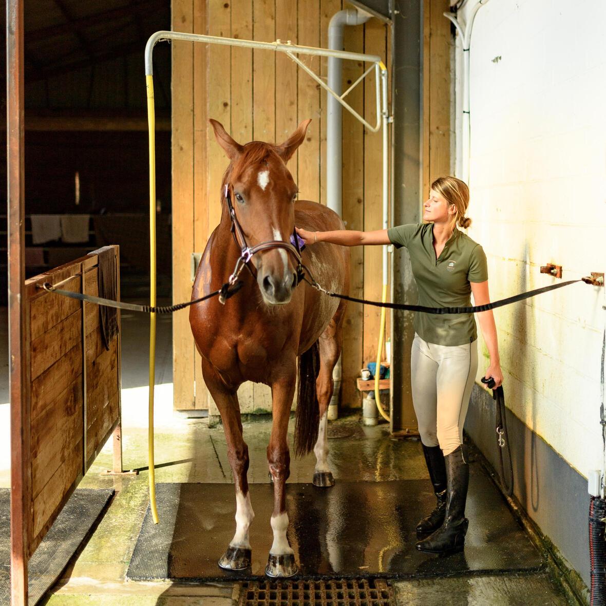 douche-cheval-bienfait-2