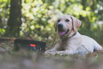 Un chien labrador avec une gamelle de croquettes devant lui