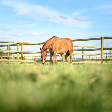 hebergement_cheval_box_pré
