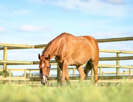 cheval-pre.jpg