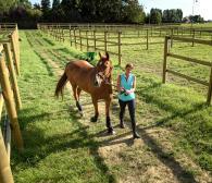 mettre_son_cheval_au_pre
