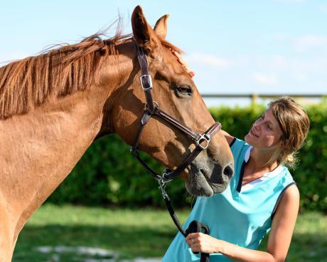 licol cuir equitation