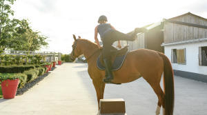 arrêt cheval equitation