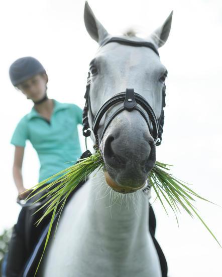 cheval_au_pre.jpg