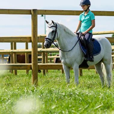 cheval au pré