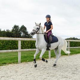 Paard in galop tijdens de training