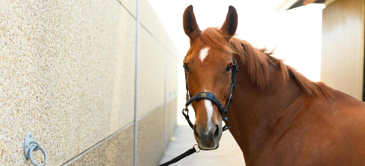 temperatuur-paard-gezondheid