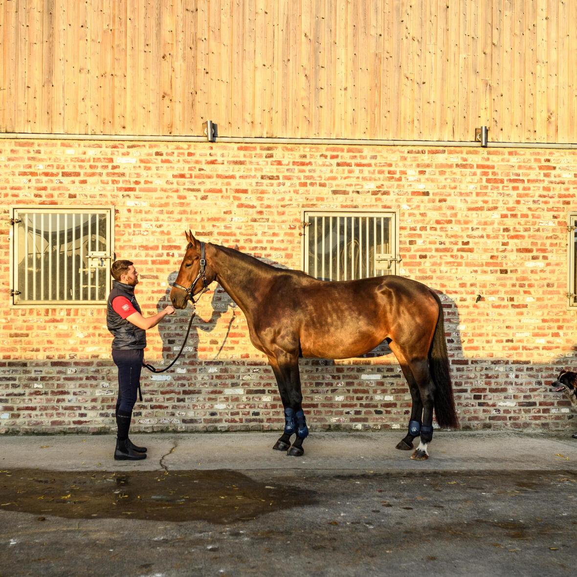 spijsverteringsstelsel-paard-gezondheid