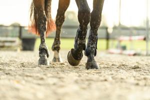 Alt/cc-protections-cheval-teaser