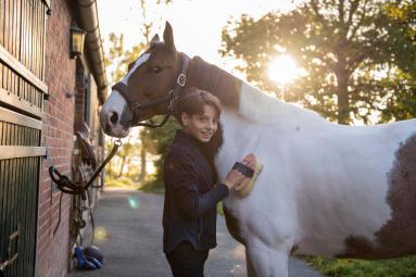 Alt/pourquoi protéger son cheval des insectes