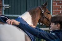 Almartigón equitación caballo y poni 500 café
