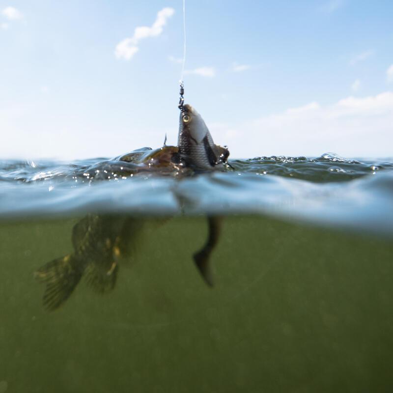Comment présenter facilement ses appâts pour la pêche en mer