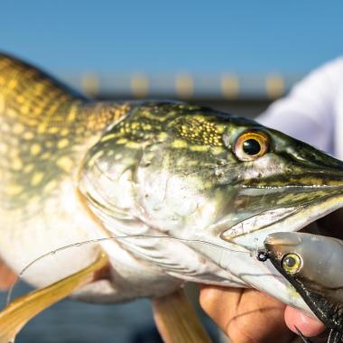 Quel équipement pour débuter la pêche aux leurres ?