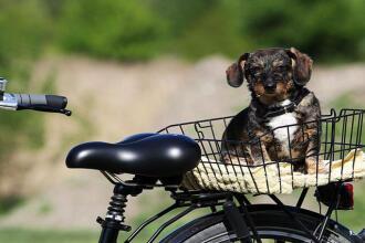 fiets hond