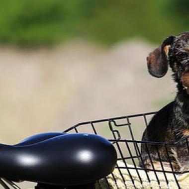 vélo chien