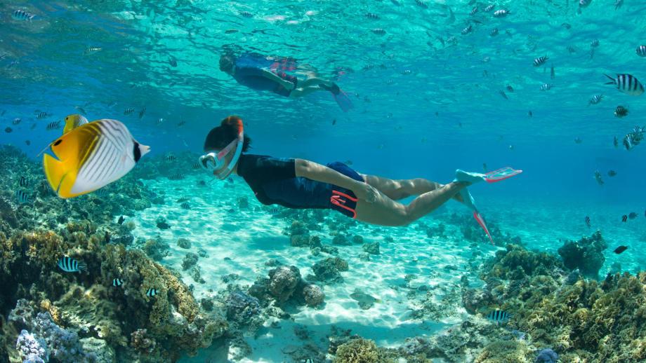 conseil lexique apnee freediving subea