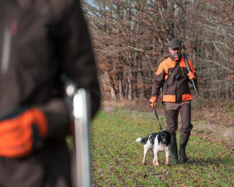 Le chien du chasseur de bécasse : un auxiliaire indispensable