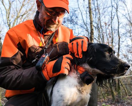 Equipement du chien pour la chasse à la bécasse