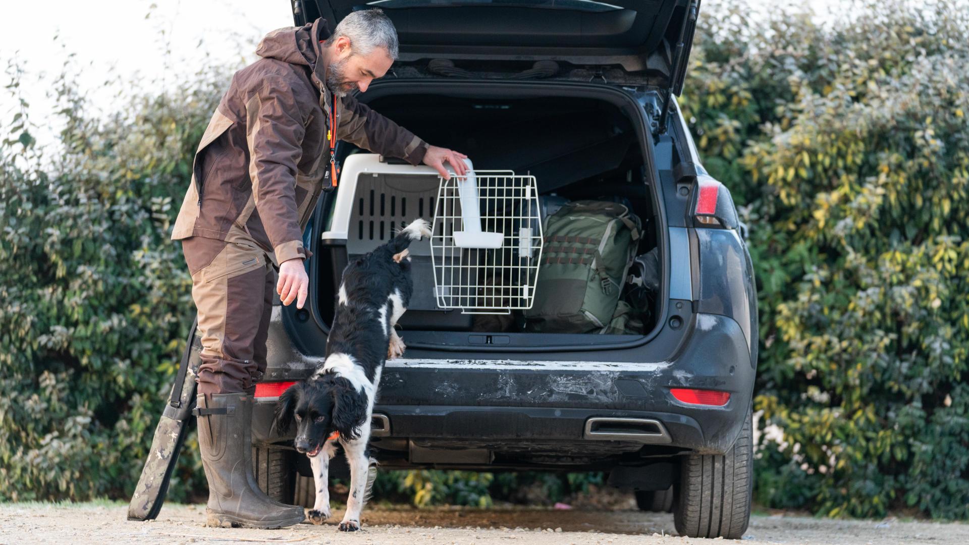 Transporter facilement et en toute sécurité son chien en voiture